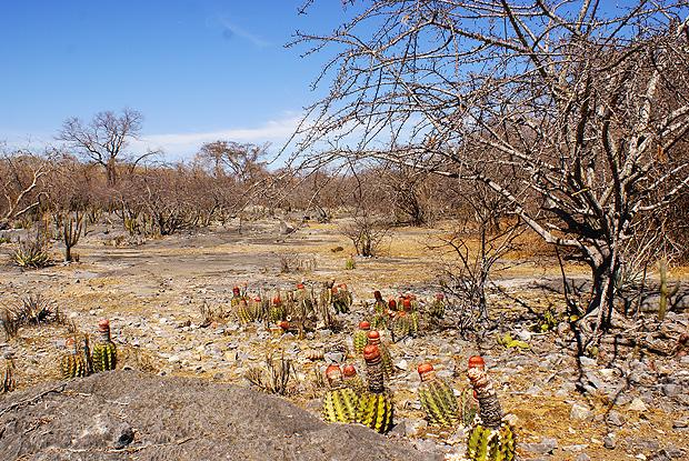 Caatinga - Biomas Brasileiros