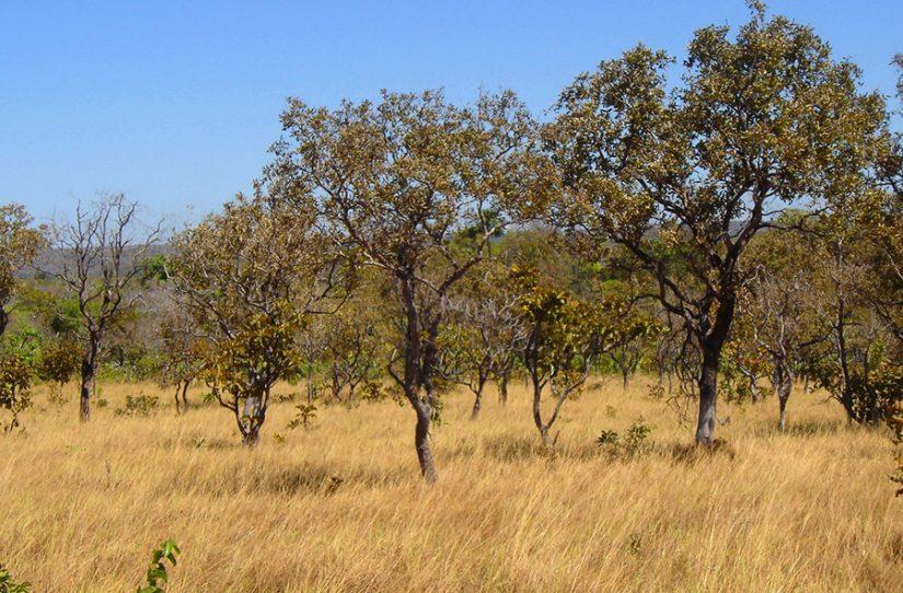 Cerrado Características, Bioma e Localização